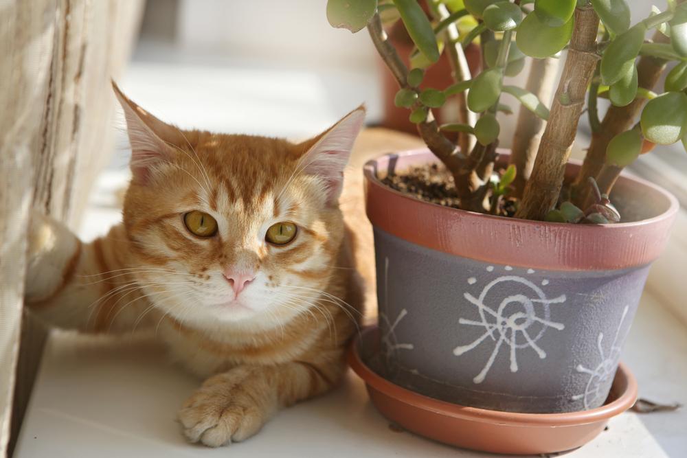 Plantas tóxicas para nuestras mascotas