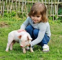 La granja escuela y la educación ambiental