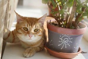 plantas-toxicas-mascotas-axa-imagen-17.4.2
